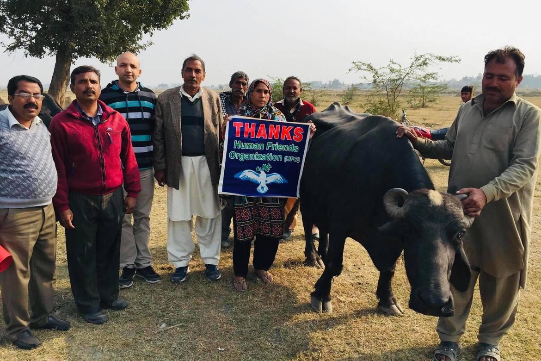 Human Friends Organization og Sajid Christopher (nummer tre fra venstre) har støttet kona til Sawan Masih (som står med takke-plakaten) med en bøffel for at de skal kunne livnære seg med mannen i fengsel.